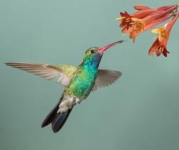 © Dennis Donohue - Fotolia.com